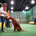dog training valencia