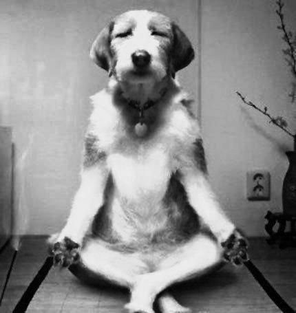 Estrés canino. Clave para adiestrar correctamente