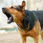 Curso adiestramiento de perros para tratamiento de la agresividad