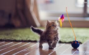 etologa gatos valencia