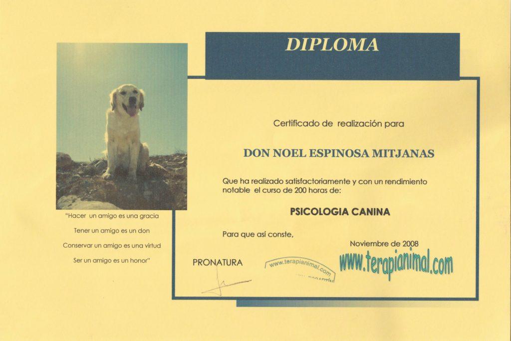 psicologia canina y psicólogo canino