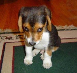 castigo a destiempo en perros
