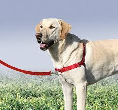 pasear con perros