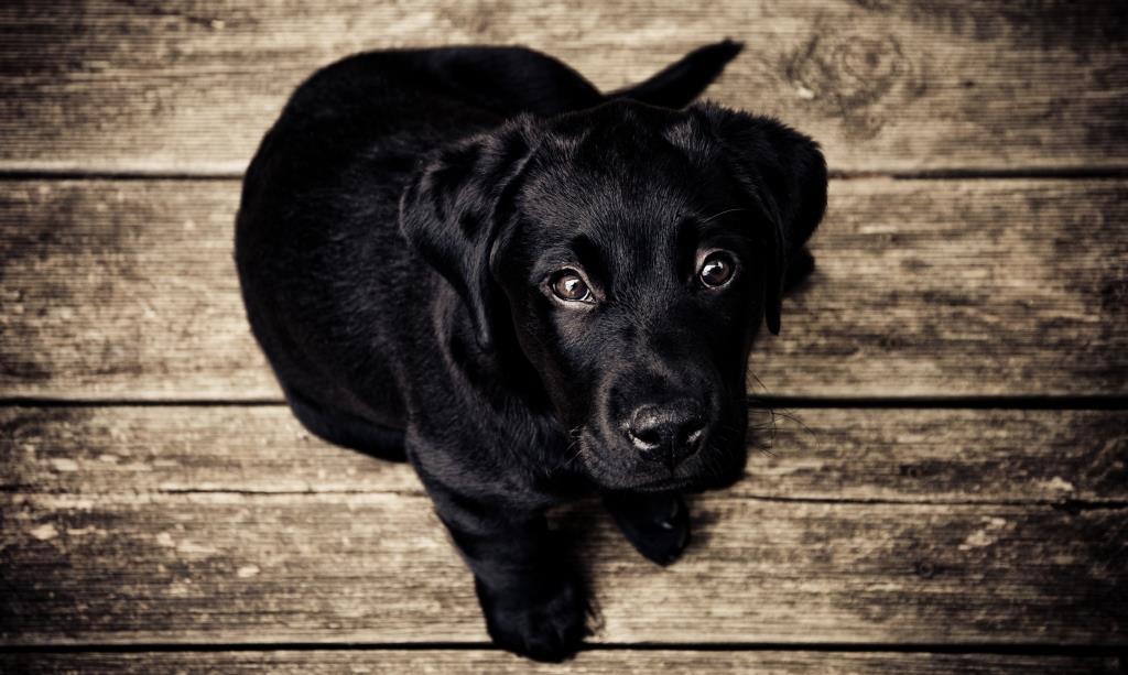 cachorro-alta-calidad-comprimida-tamaño-documentos