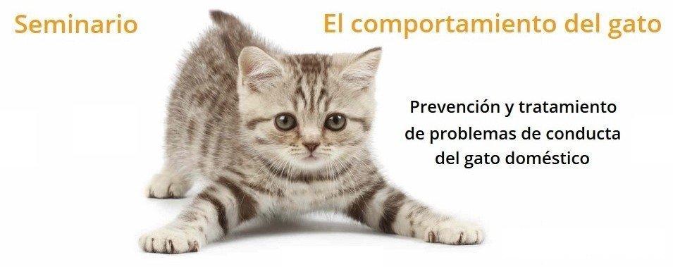 seminario-gatos