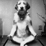 Estrés canino