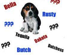 nombres perro