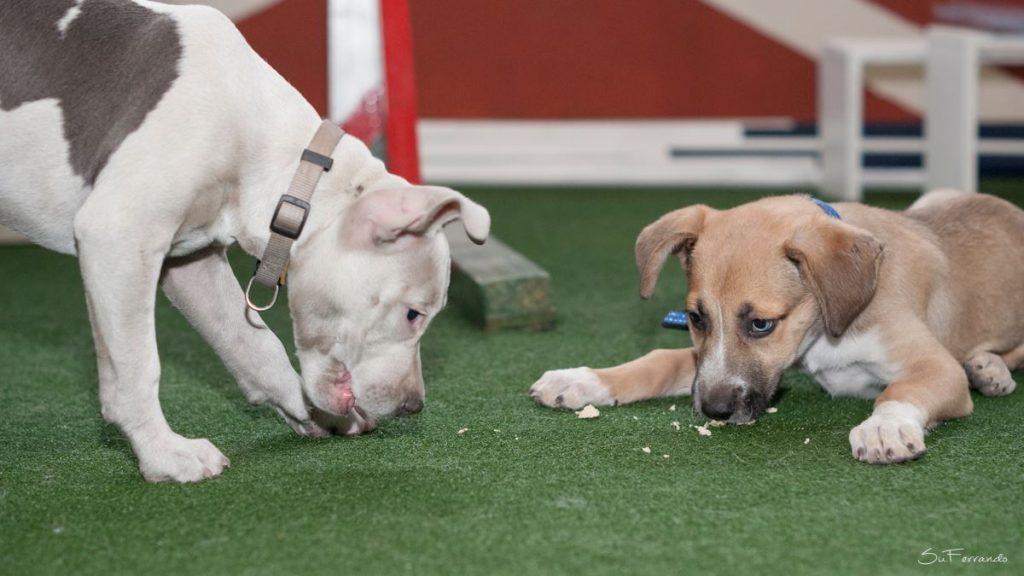 adiestramiento cachorros valencia