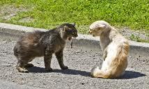 agresividad gatos valencia