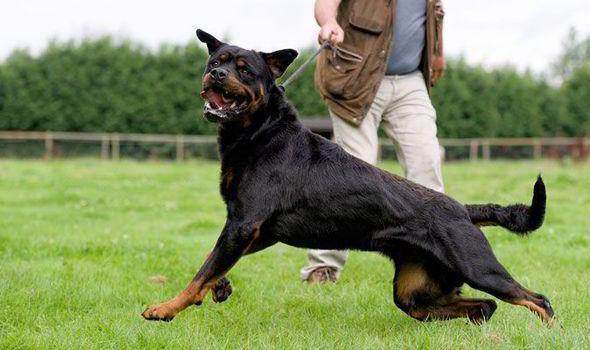 seguro perros