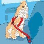 vacaciones perros. adiestramiento valencia