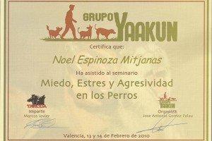 adiestramiento y etología en valencia