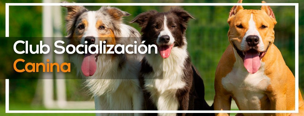 Socilizacion canina Valencia - Eurekan